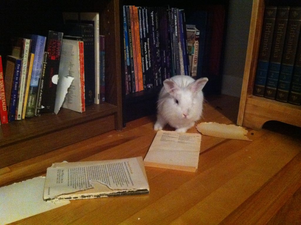 Curiously, she went straight for the Margaret Murray books about mediaeval witchcraft. And ate them.